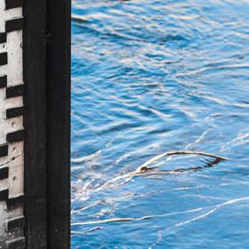 Wasserrechtsverfahren